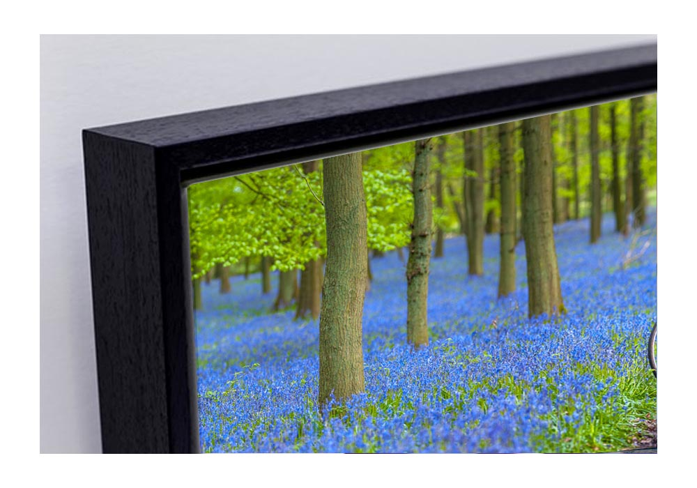 Panoramic Bluebell wood  by Assaf Frank