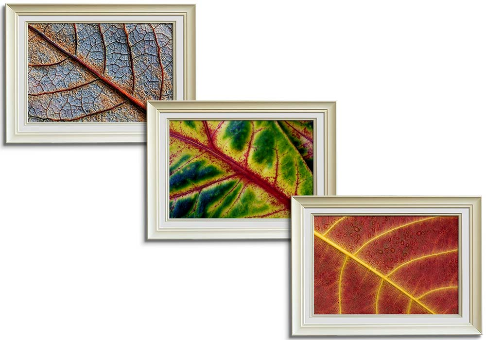 Abstract Leaf collection  by Joanna Clegg