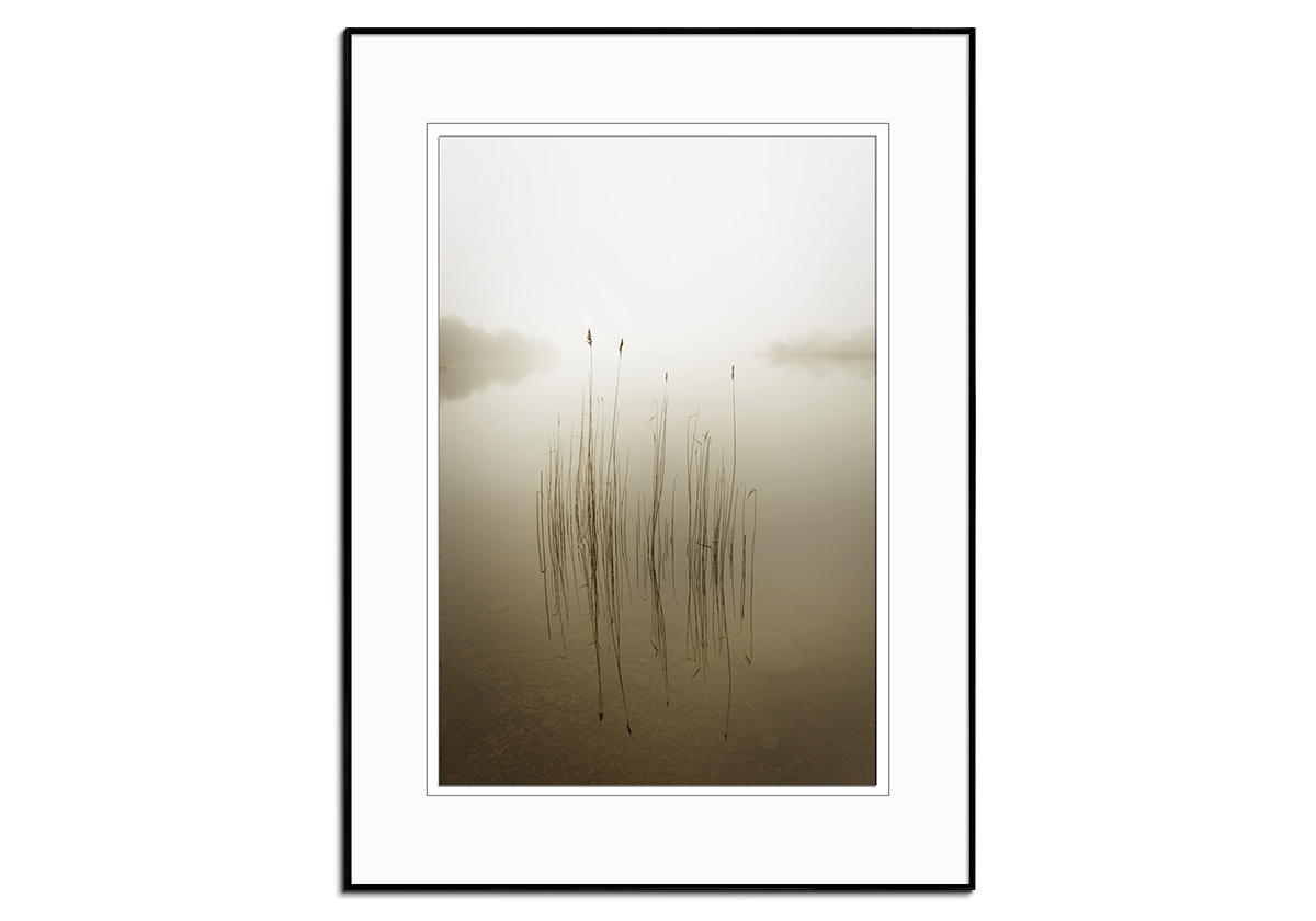 Reeds in the Mist by David Ahern