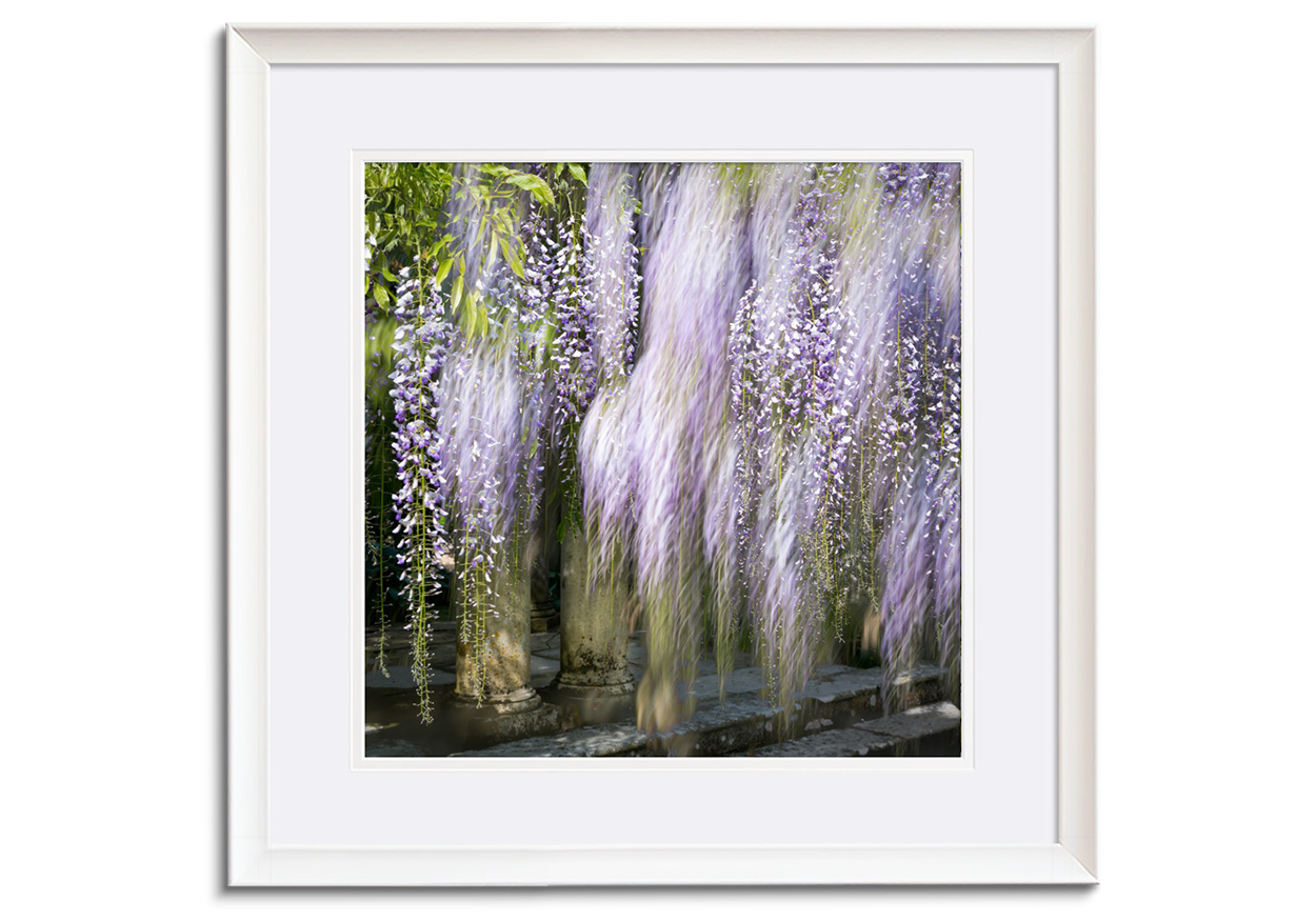 Wisteria XIII by Abstract