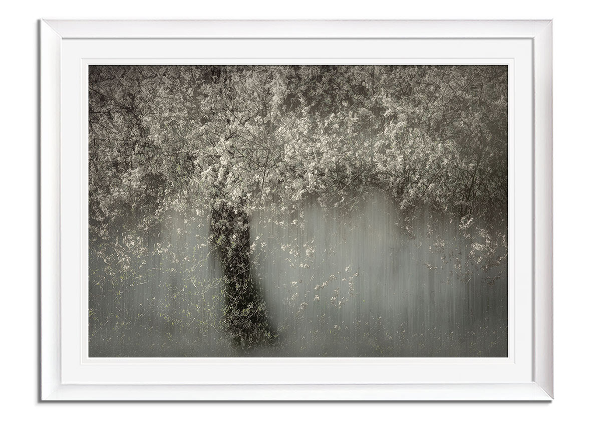 White Blossom  by Nel Talen