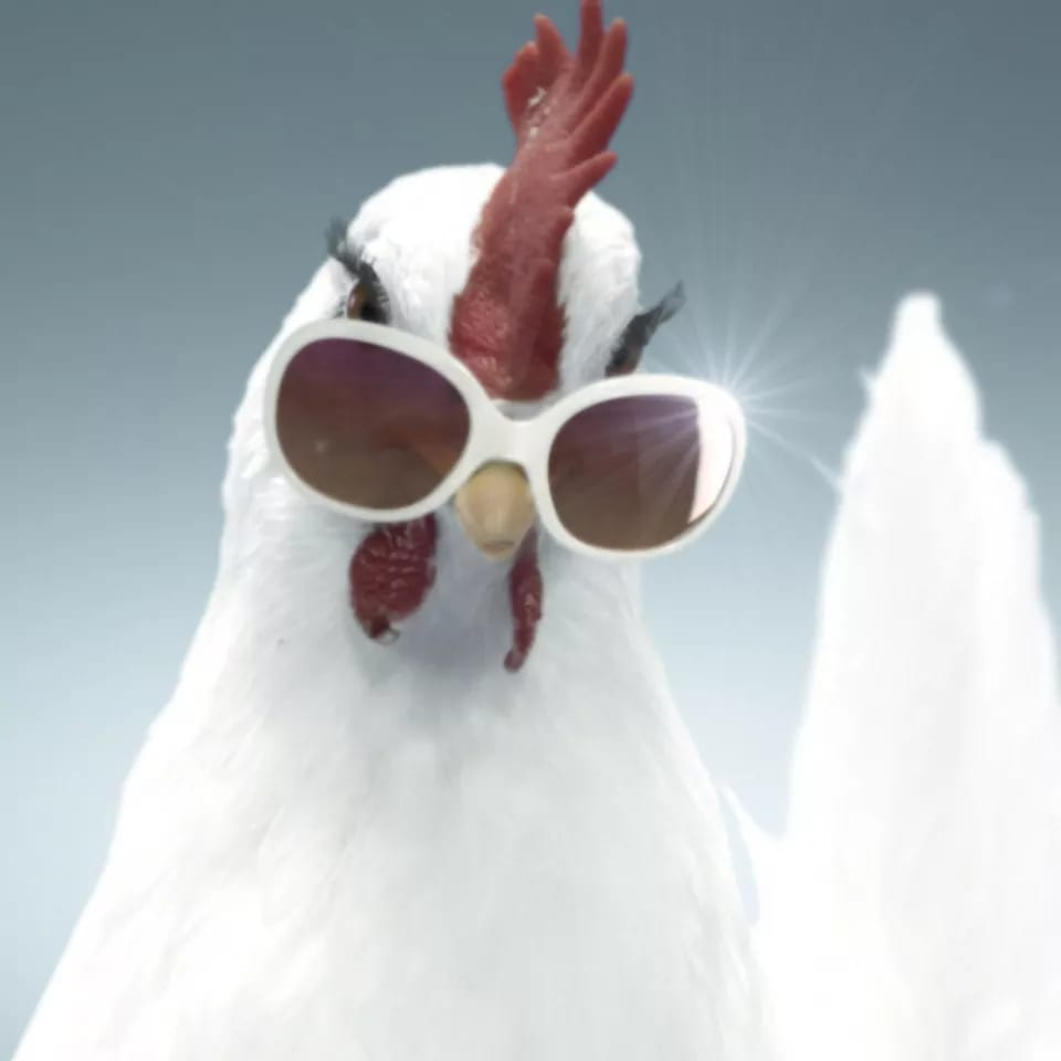 Hahn mit Sonnenbrille