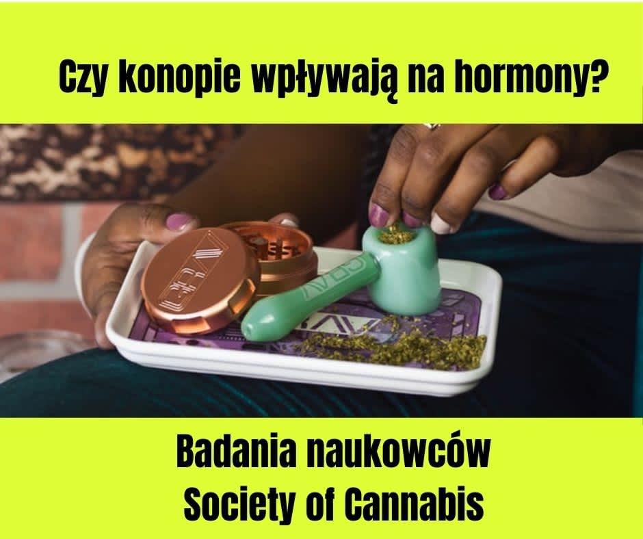 Czy konopie wpływają na hormony?