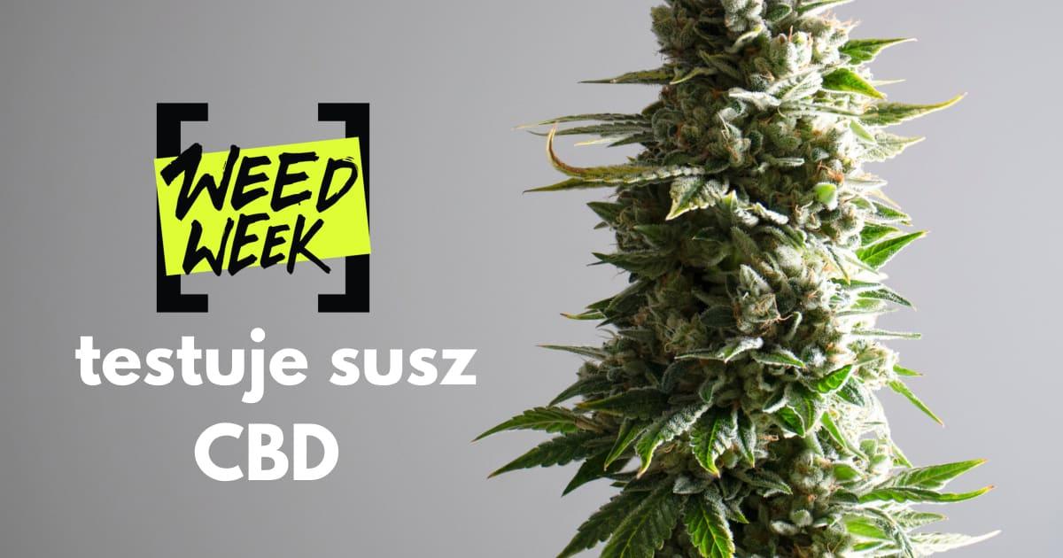 Susz CBD od firmy Cannabisland – recenzja