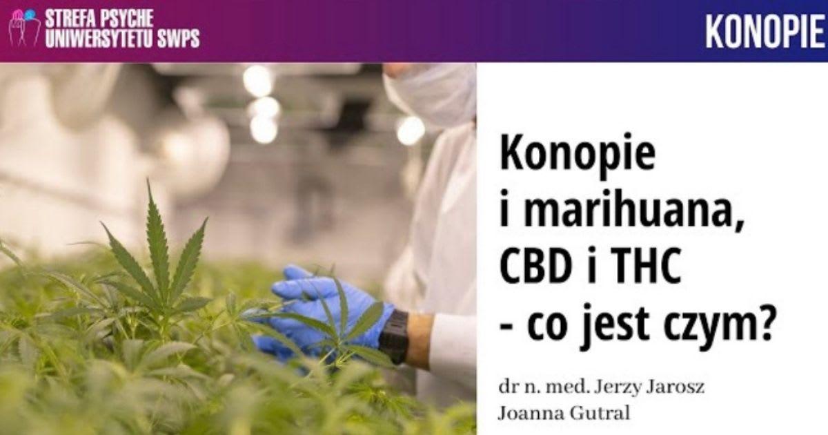 Czym różnią się konopie od marihuany? Webinar SWPS już niedługo!