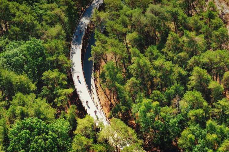 La piste cyclable à la cime des arbres