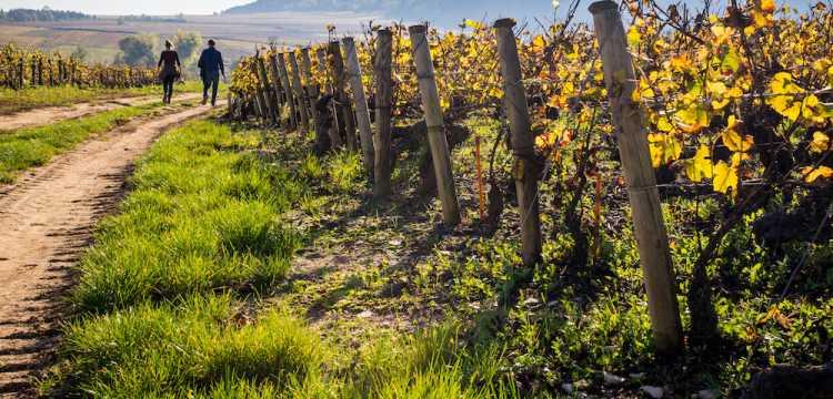 Promenade automnale dans les vignes
