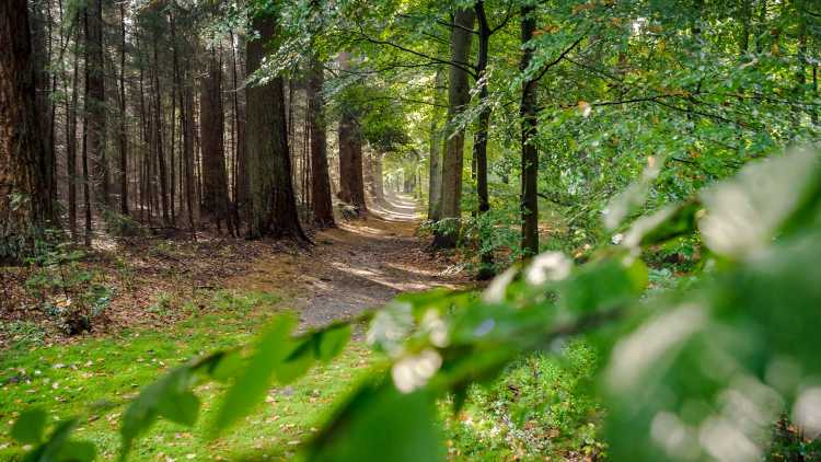 rust in een prachtig bos van Veluwe