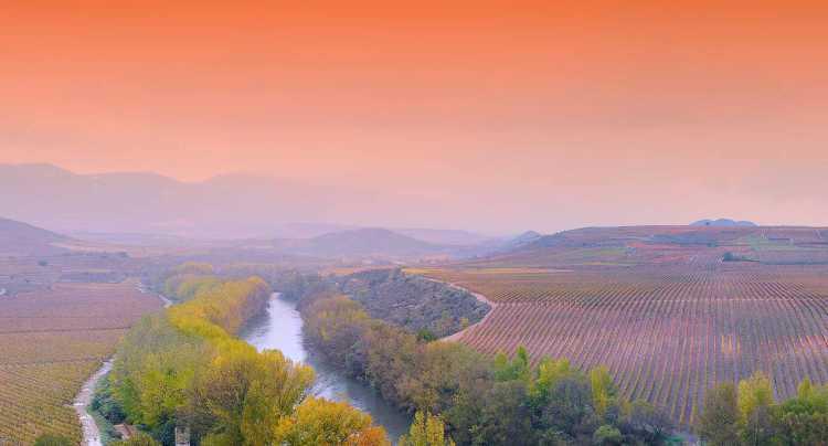 Viñedos en Rioja Alta