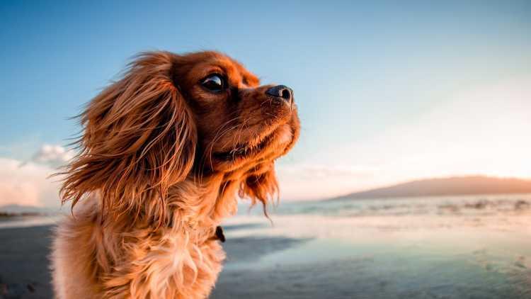 Escapada pet-friendly en la costa