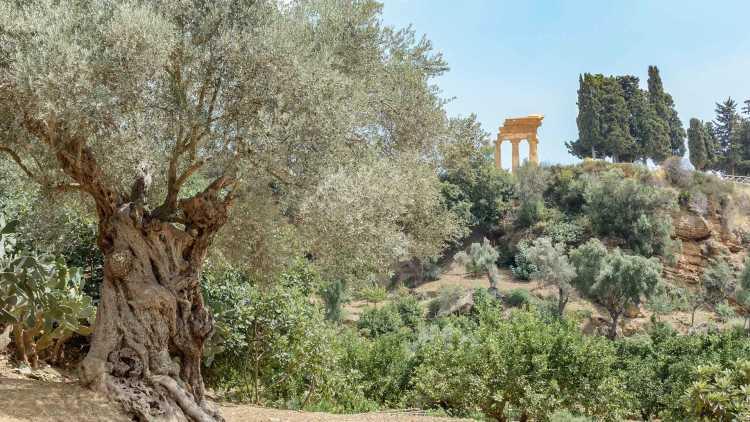 I giardini di Kolymbetra in Sicilia