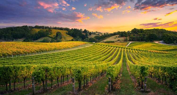 Vinos europeos