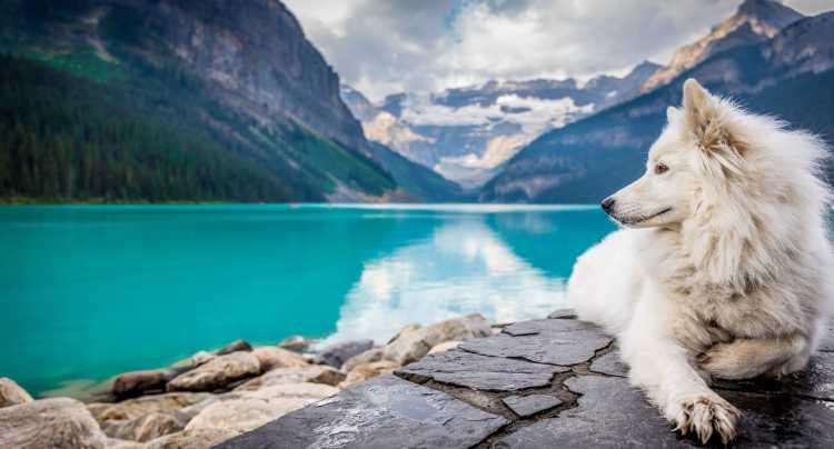 I nostri amici animali meritano una giornata a loro dedicata