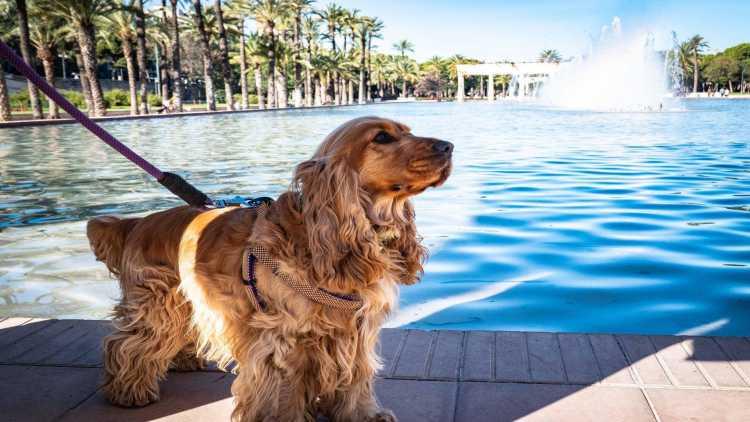 Il cane ha uno splendido rapporto con l'acqua