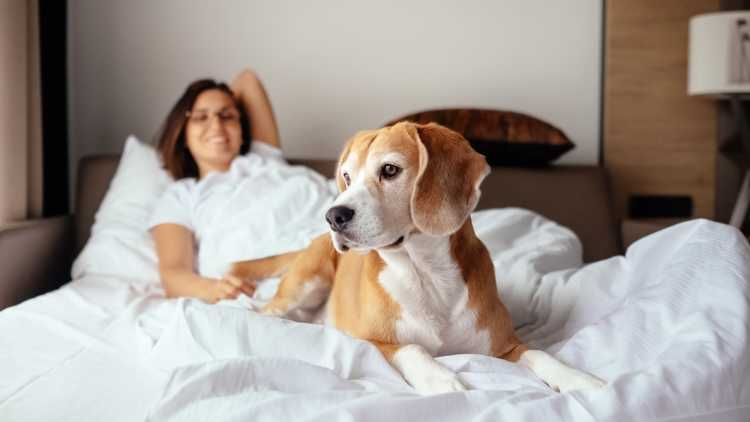 Sempre più numerosi gli hotel che accolgono i nostri animali