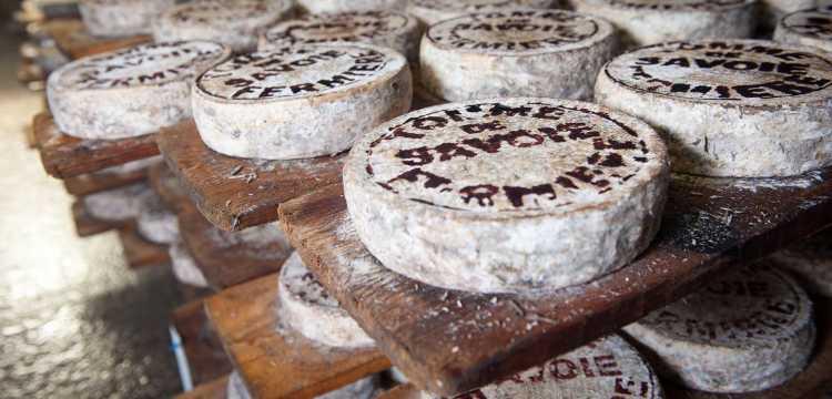 Du fromage partout !