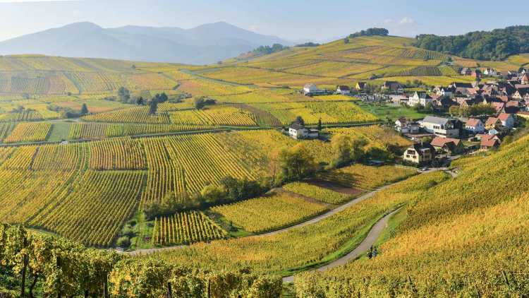 Wijngaarden aan de Rijn