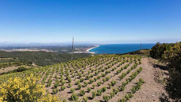 Viña Collioure, Banyuls-sur-Mer