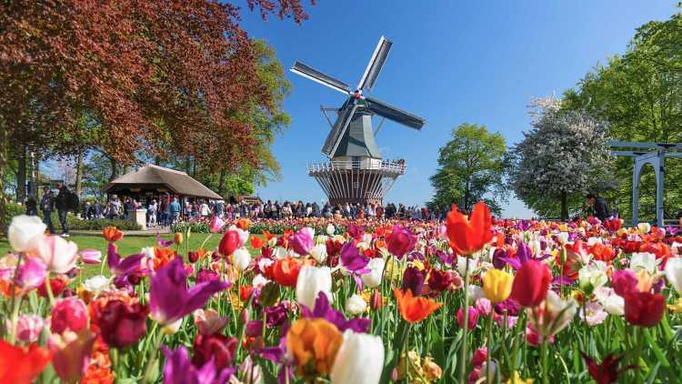 parco di tulipani di Keukenhof
