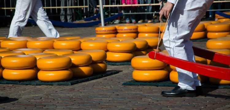 Kaasmarkt in Nederland