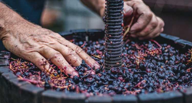 Experiencia vinos con DO