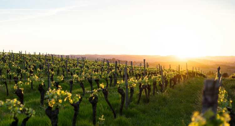 Bezoek eens een wijngaard!