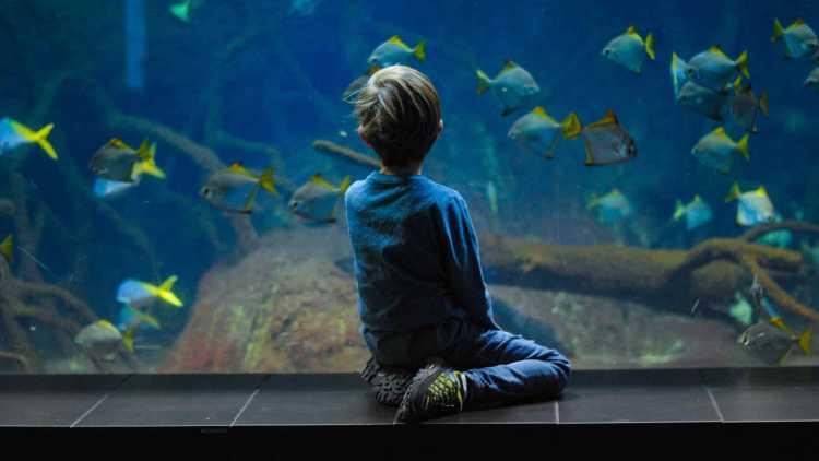 Grand Aquarium van Saint-Malo