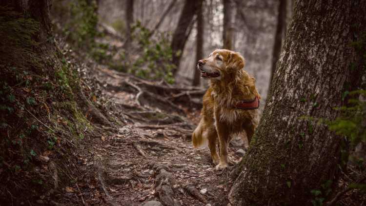 De Ardennen: ook een paradijs voor honden