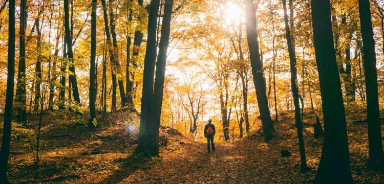 Hiken in België in de herfst