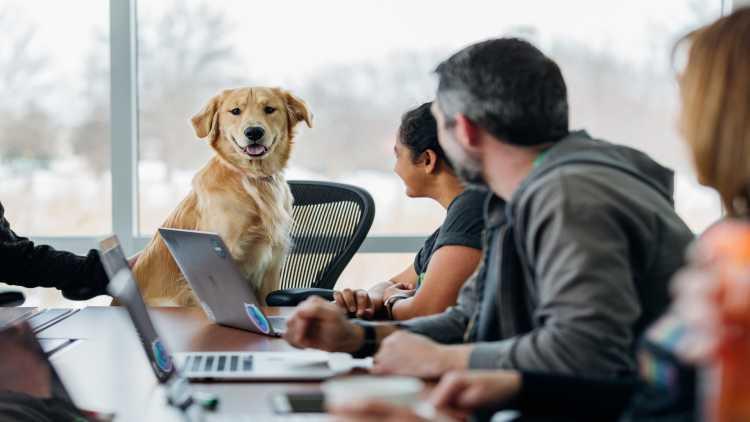 Portare il proprio cane in ufficio migliora la produttività