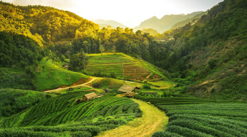 Hotels in Cameron Highlands