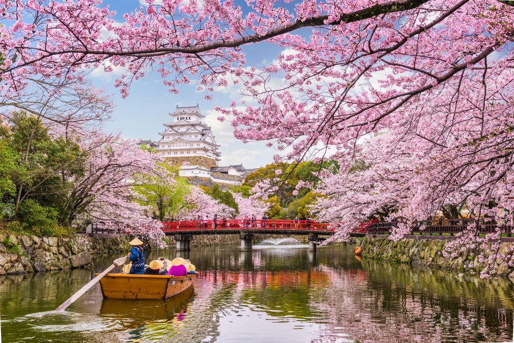 Japan's Cherry Blossom Season is Almost Here! Here's Where and When to see the Flowers Before They're Gone