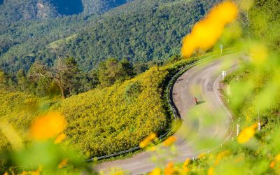The Most Stunning Route in Southeast Asia? Motorcycle Journey Through the Winding Hills of Mae Hong Son Loop