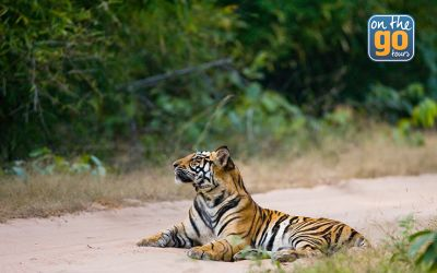 Tours that Give Back: How We Helped Save the Tigers Through Travel