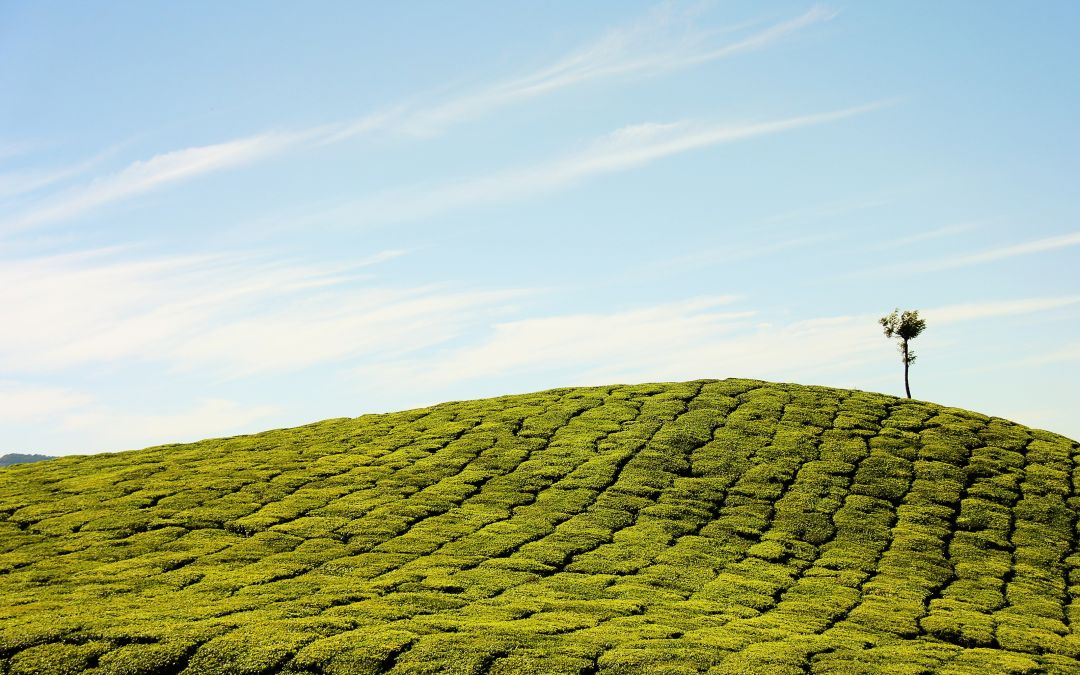 Tea and a Lot to See – Backpacking in Munnar
