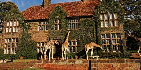 giraffe-manor1