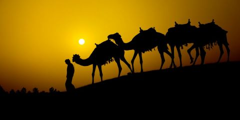 ATM2008 camels