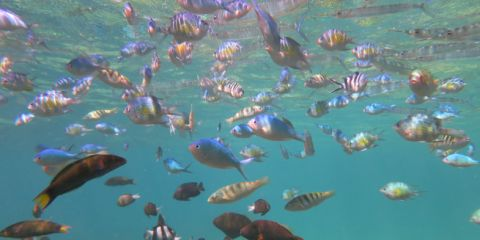 Fish 785