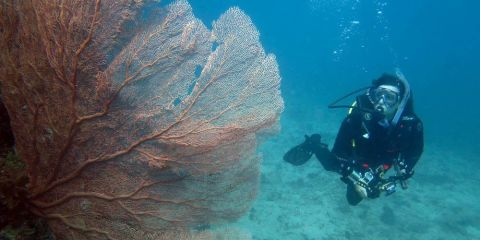 Diving on Japanese WWII submarine near Honiara