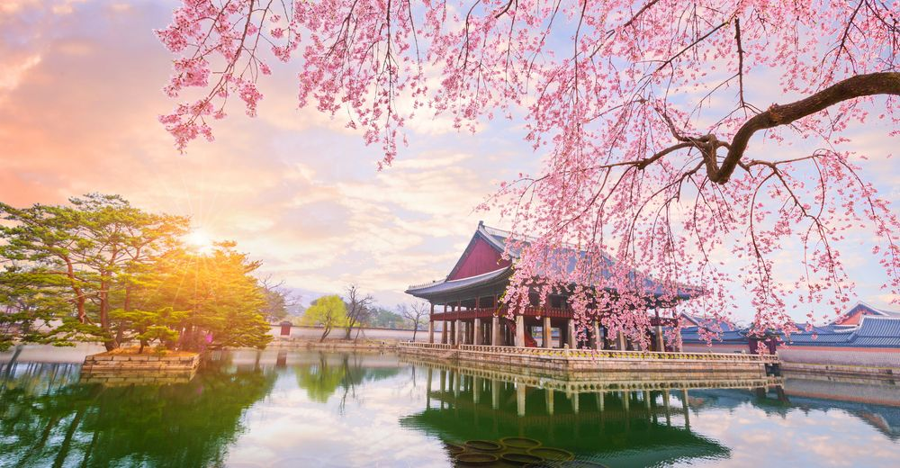 When And Where To Enjoy Cherry Blossoms In South Korea This Season