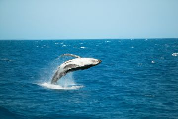 WhaleWatchingHerveyBaybyChrisMcLennan_nnrnzp