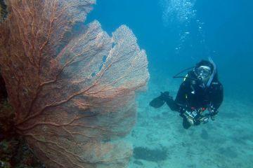 Diving on Japanese WWII submarine near Honiara