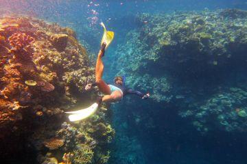 Tawali Coral gardens snorkel_2046