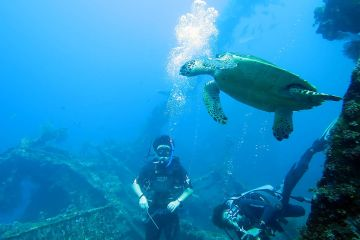 0401-Turtle-with-divers-on-the-wreck-diving-the-USAT-Liberty-at-Tulamben-DPI-0401