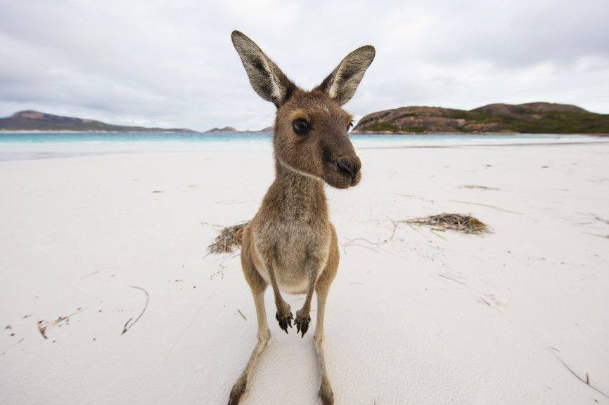 Australia Untamed: Discover the Wildlife from Downunder