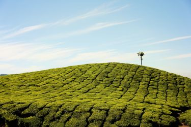 Tea and a Lot to See - Backpacking in Munnar