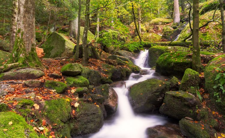 5 Enchanted Places in Germany Straight out of Fairytales - Black Forest