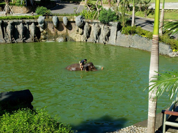 5 Ciri Kebun Binatang Yang Baik Travelon By Wego Indonesia