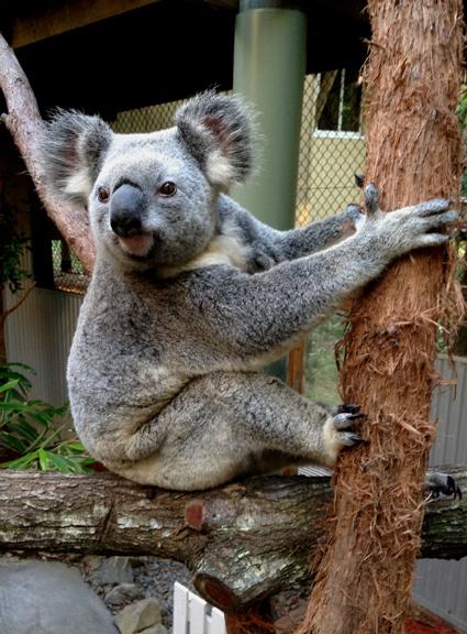 زيارة حدائق الحيوانات في بريزبين ممتعة - الصورة من موقع brisbanekids