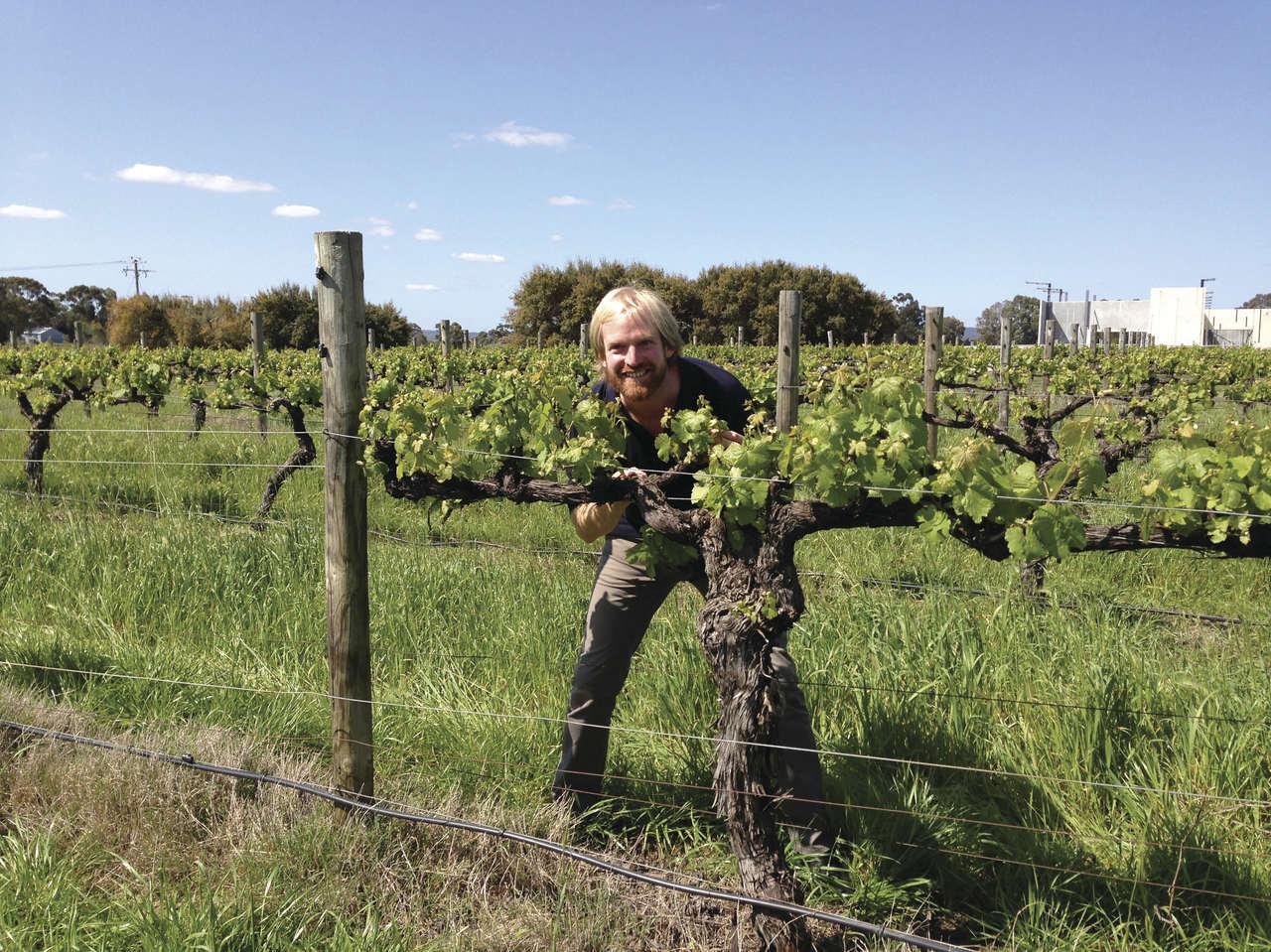 Swan Valley wineries by Rich Keam